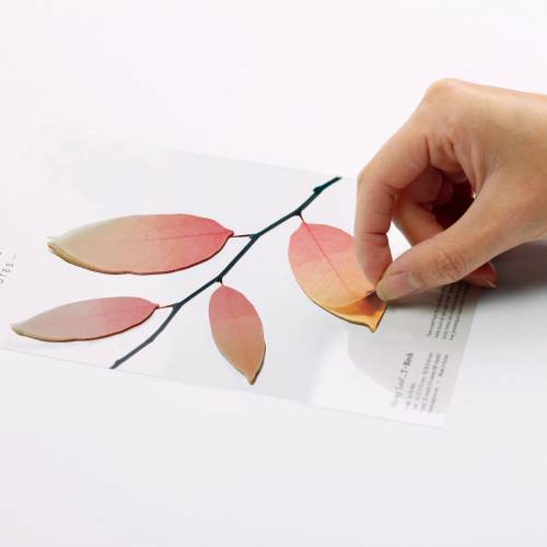Sticky Leaf Tracing Hêtre
