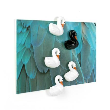 Aimants Cygne - Swan