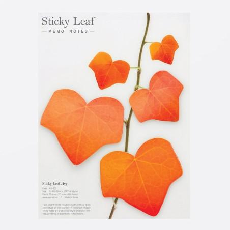 Stickyleaf Ivy