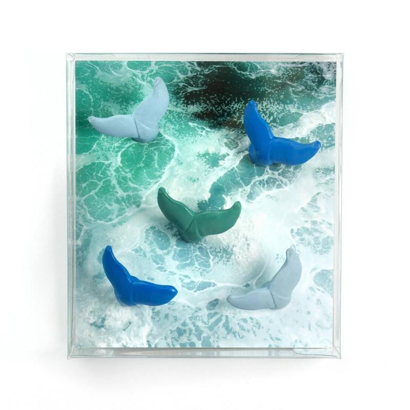 Aimants Queue de baleine